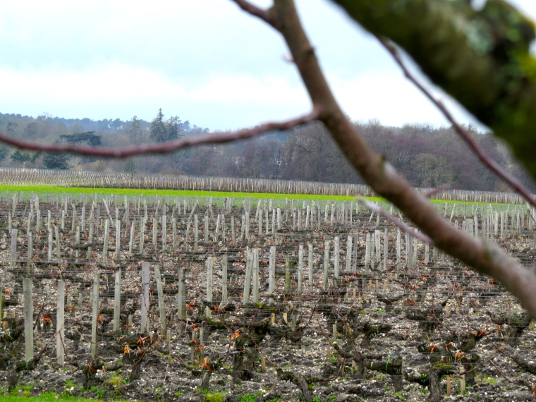 Chateau Haut Bailly's plots during Late Feb2013 am seeing