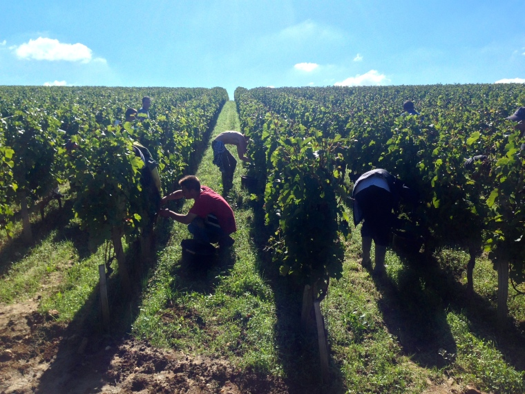 the 2013 picking early October at Troplong
